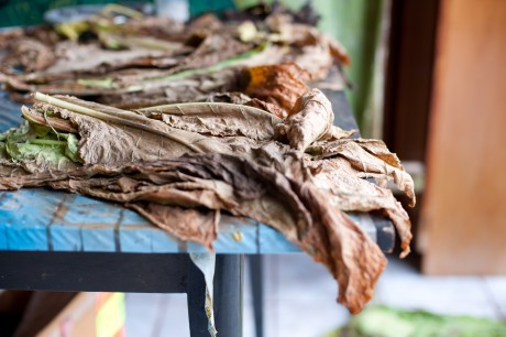 kubanischer Tabak